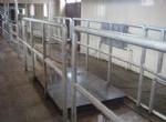 Living Cattle Gross-weight Scale System